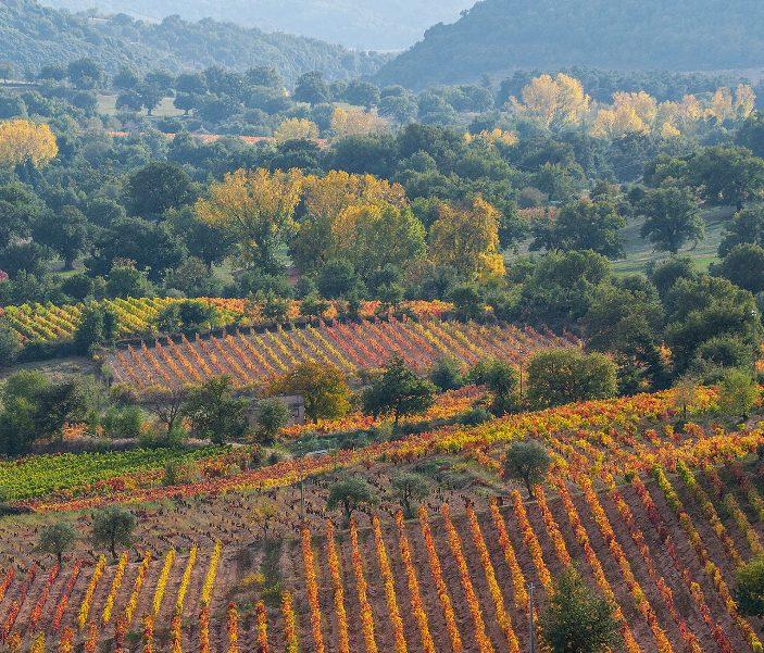 AUTUNNO IN BARBAGIA, Da oggi 3 giorni all'insegna tradizione vitivinicola a Sorgono. Per novembre si preparano Tiana e Ovodda