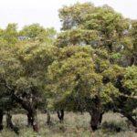 AGRICOLTURA, Comparto del sughero: accordo tra Confindustria ed Agris per il rilancio