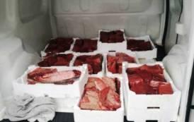 CARBONIA, Sequestrati circa 125 chili di tranci di tonno rosso (VIDEO)