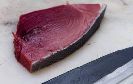 PESCA, Tonno rosso. Assessore Caria chiede riconoscimento nuove quote pesca per la marineria sarda