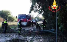 ORISTANO, Una dozzina di alberi caduti a Torregrande