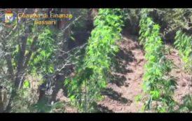 Il VIDEO del sequestro ad Oschiri di una piantagione di marijuana con 270 piante